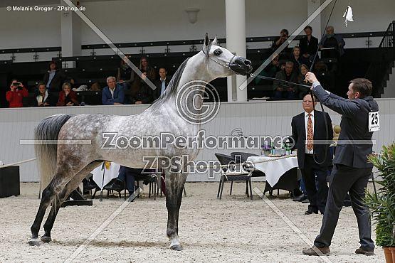 Echo Gazal (Pegasus x Egzyna - Eldon)