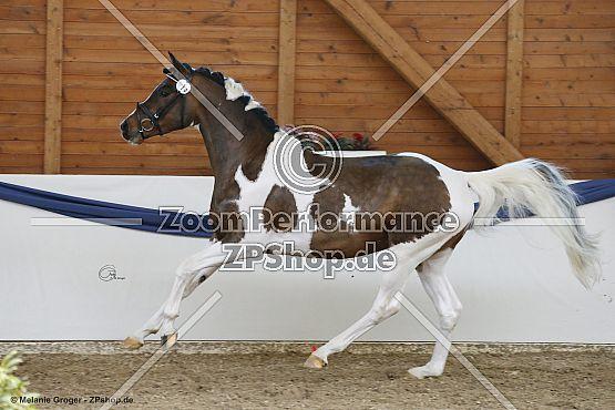 Crazy Horse PS (Gabun x Cinderela X - Germanicus Rex)