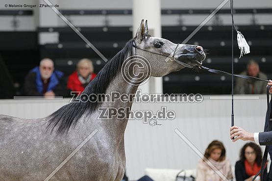 Evelia (Empire x Evolett - Ajman Moniscione)