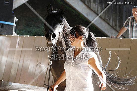 AJM Shirass (AJM Amirash x Ebony Bataasha - Date With Destiny)