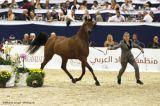 Shamaliah (Stival x Al Shareefah - CH El Brillo)