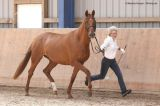 Wildfire (Le Rouge x Wadra - Naheed)