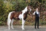 Crazy Horse PS (Gabun x Cinderella X - Germanicus Rex)