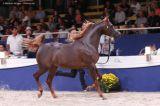 D Raad (Royal Colours x HJ Romancing Fame - Legacy of Fame)