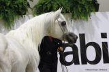Al Lahab (Laheeb x The Vision HG - Thee Desperado)
